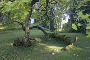 Parco di Villa Manzoni - La collinetta
